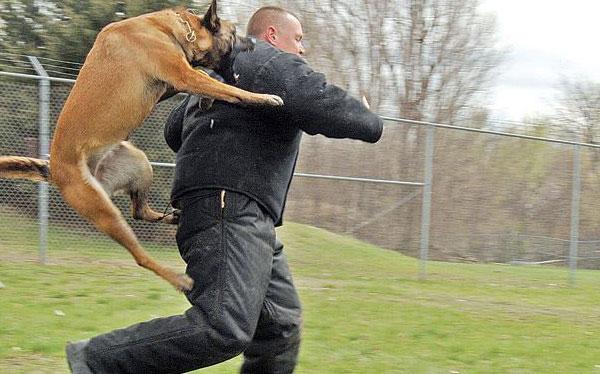 Dog attack prague stag premium
